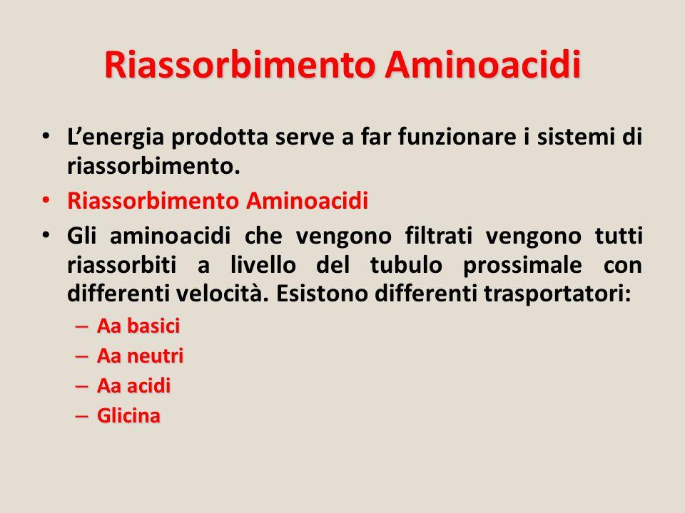 Riassorbimento Aminoacidi L'energia prodotta serve a far funzionare i sistemi di riassorbimento. Riassorbimento Aminoacidi Gli aminoacidi che vengono