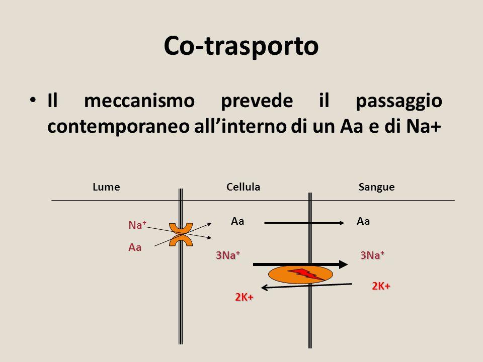 Co-trasporto Il meccanismo prevede il passaggio contemporaneo all'interno di un Aa e di Na+ LumeCellulaSangue Na + Aa 3Na + 2K+2K+