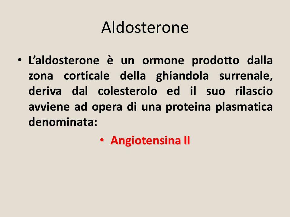 Aldosterone L'aldosterone è un ormone prodotto dalla zona corticale della ghiandola surrenale, deriva dal colesterolo ed il suo rilascio avviene ad op