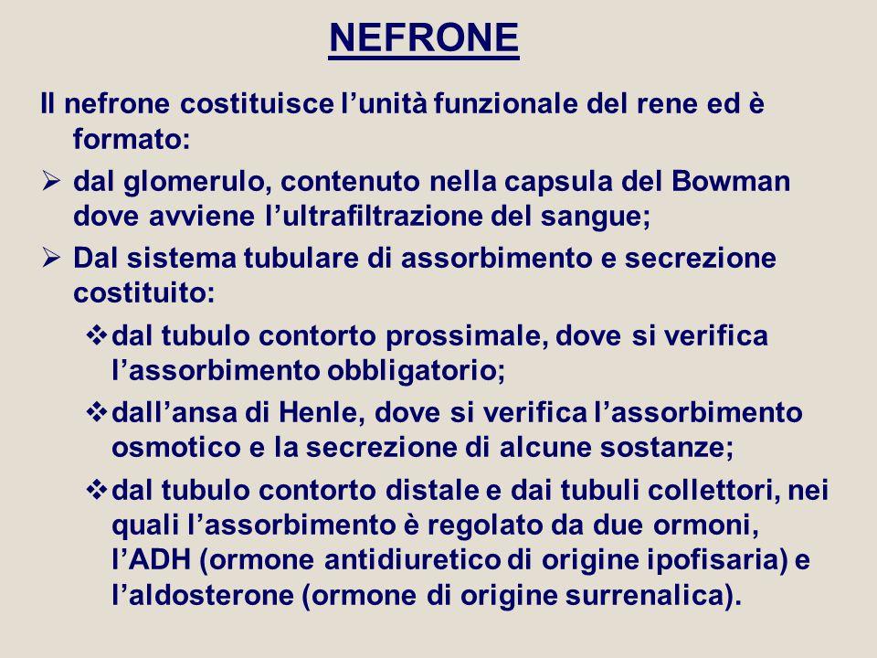 NEFRONE Il nefrone costituisce l'unità funzionale del rene ed è formato:  dal glomerulo, contenuto nella capsula del Bowman dove avviene l'ultrafiltr