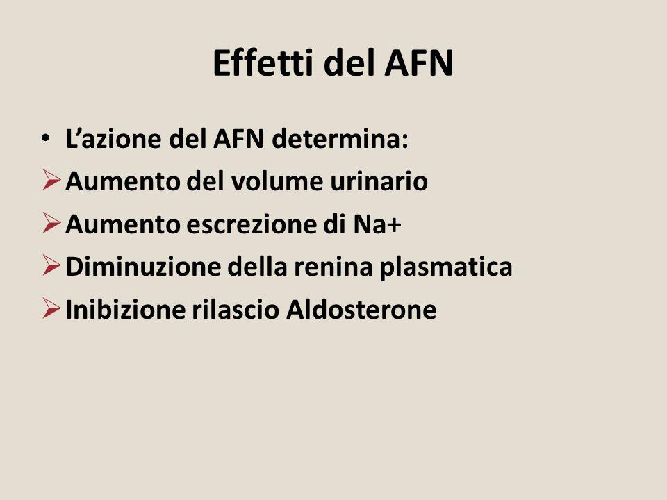 Effetti del AFN L'azione del AFN determina:  Aumento del volume urinario  Aumento escrezione di Na+  Diminuzione della renina plasmatica  Inibizio