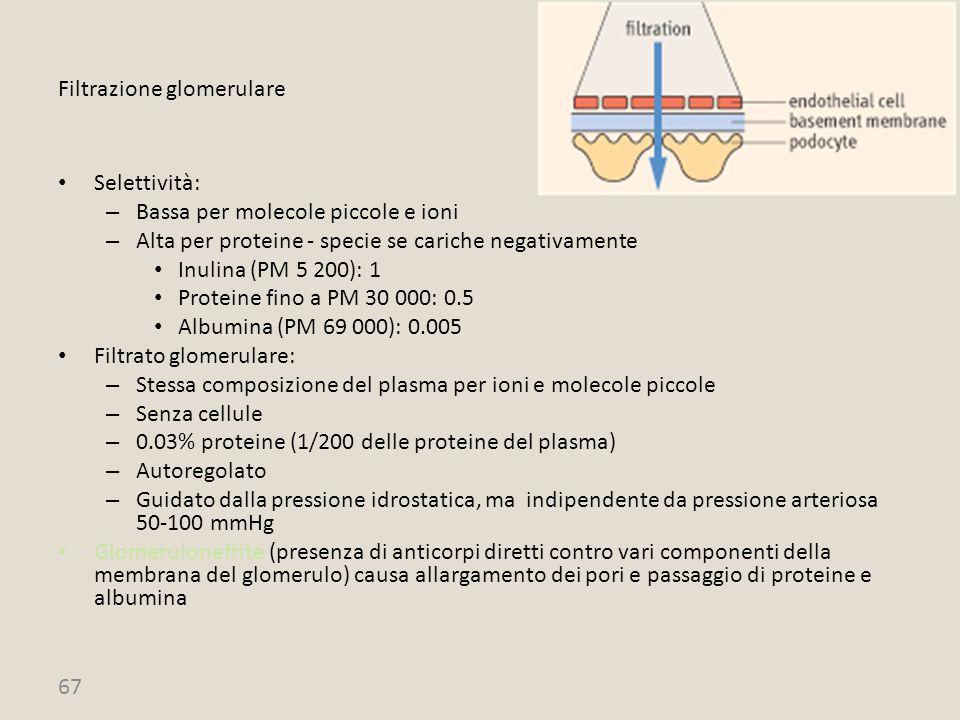 67 Filtrazione glomerulare Selettività: – Bassa per molecole piccole e ioni – Alta per proteine - specie se cariche negativamente Inulina (PM 5 200):