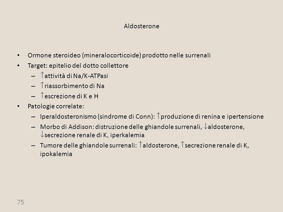 75 Aldosterone Ormone steroideo (mineralocorticoide) prodotto nelle surrenali Target: epitelio del dotto collettore –  attività di Na/K-ATPasi –  ri