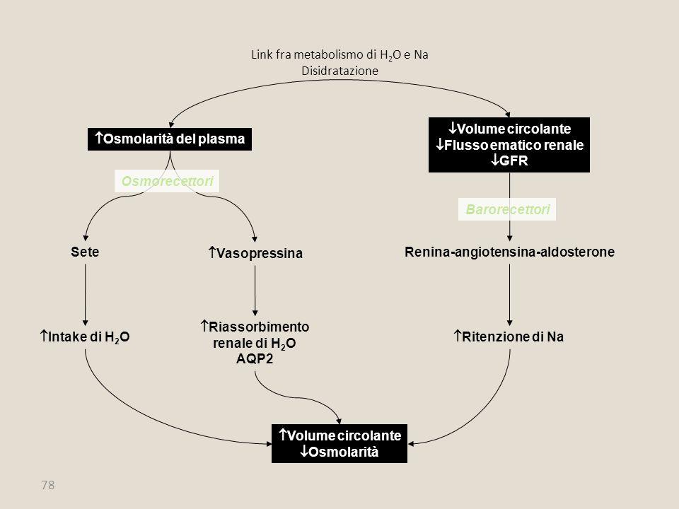 78  Osmolarità del plasma  Volume circolante  Flusso ematico renale  GFR Sete  Vasopressina  Intake di H 2 O  Riassorbimento renale di H 2 O AQ