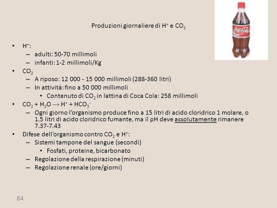 84 Produzioni giornaliere di H + e CO 2 H + : – adulti: 50-70 millimoli – infanti: 1-2 millimoli/Kg CO 2 – A riposo: 12 000 - 15 000 millimoli (288-36