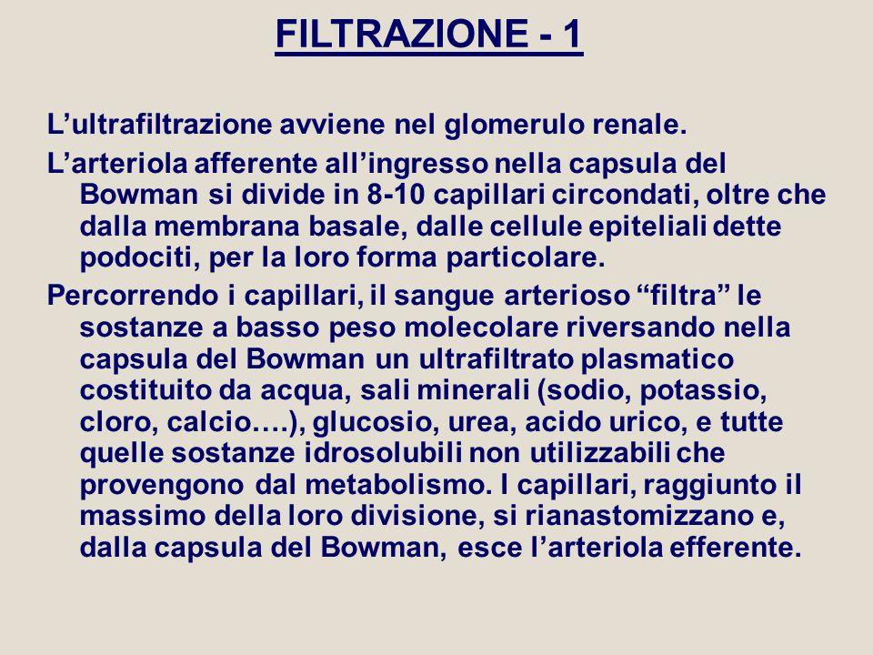 FILTRAZIONE - 2 La filtrazione glomerulare avviene per diffusione secondo il gradiente di pressione ed è regolata dalla relazione: P fe = P i – (P onc + P B ) 25 60 25 10 P fe = pressione di filtrazione efficace P i = pressione idrostatica, dipendente dalla pressione arteriosa.