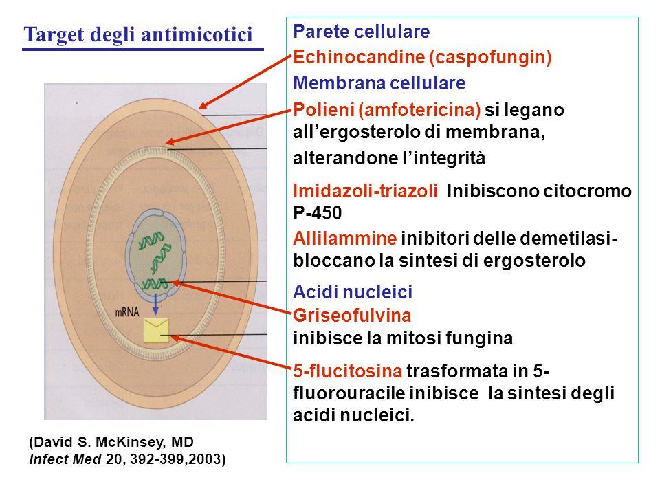 Parete cellulare Echinocandine (caspofungin) Membrana cellulare Polieni (amfotericina) si legano all'ergosterolo di membrana, alterandone l'integrità