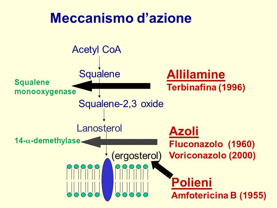 Acetyl CoA Squalene Lanosterol ( ergosterol ) Allilamine Terbinafina (1996) Azoli Fluconazolo (1960) Voriconazolo (2000) Squalene-2,3 oxide Squalene m