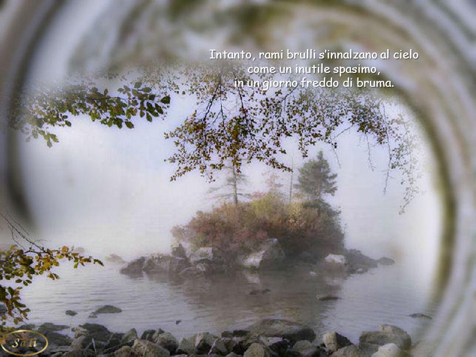 E' quasi compiuto il grande sopore invernale il grande sopore invernale e nella nebbia arranca un timido raggio di sole, reminiscenza d'estate.