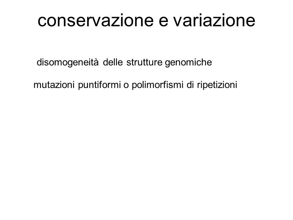 conservazione e variazione disomogeneità delle strutture genomiche mutazioni puntiformi o polimorfismi di ripetizioni