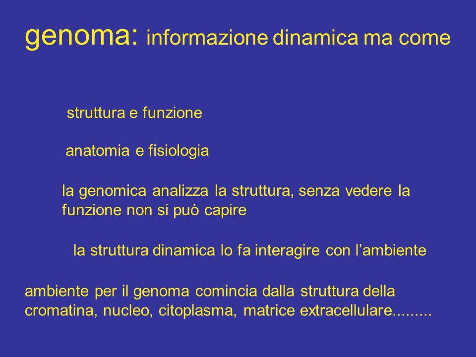 genoma: informazione dinamica ma come struttura e funzione anatomia e fisiologia la genomica analizza la struttura, senza vedere la funzione non si può capire la struttura dinamica lo fa interagire con l'ambiente ambiente per il genoma comincia dalla struttura della cromatina, nucleo, citoplasma, matrice extracellulare.........