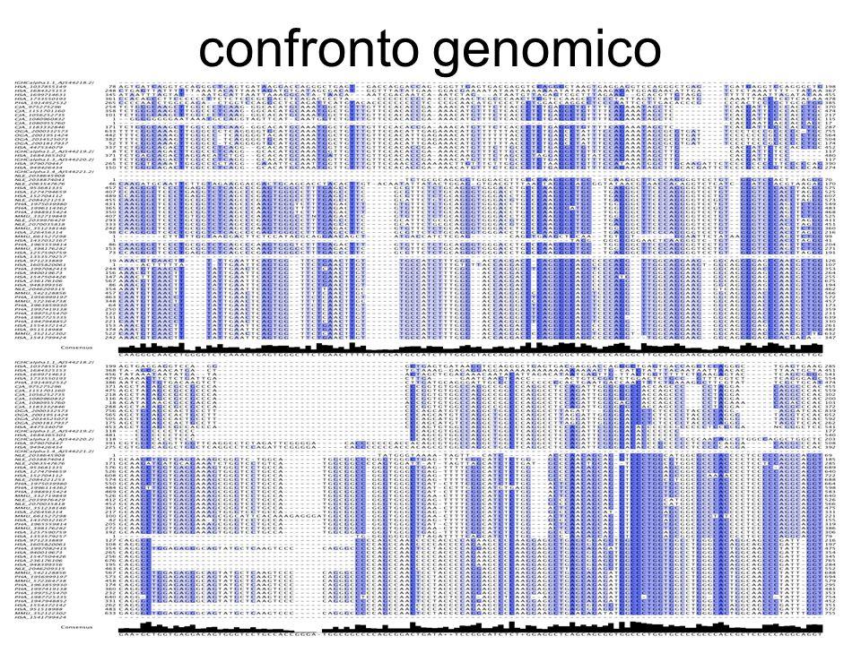 confronto genomico