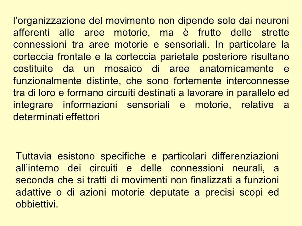 l'organizzazione del movimento non dipende solo dai neuroni afferenti alle aree motorie, ma è frutto delle strette connessioni tra aree motorie e sens