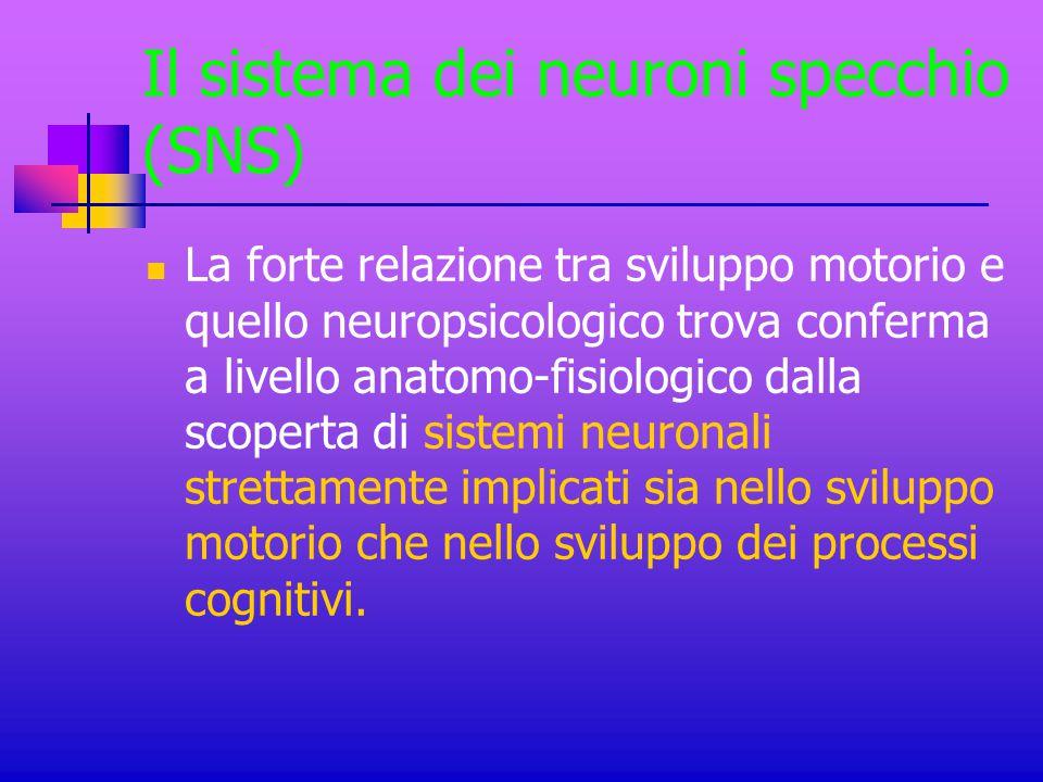 Il sistema dei neuroni specchio (SNS) La forte relazione tra sviluppo motorio e quello neuropsicologico trova conferma a livello anatomo-fisiologico d