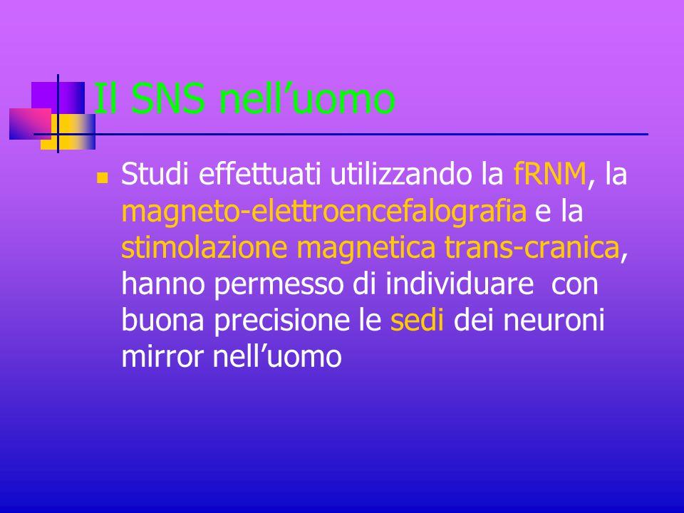 Il SNS nell'uomo Studi effettuati utilizzando la fRNM, la magneto-elettroencefalografia e la stimolazione magnetica trans-cranica, hanno permesso di i