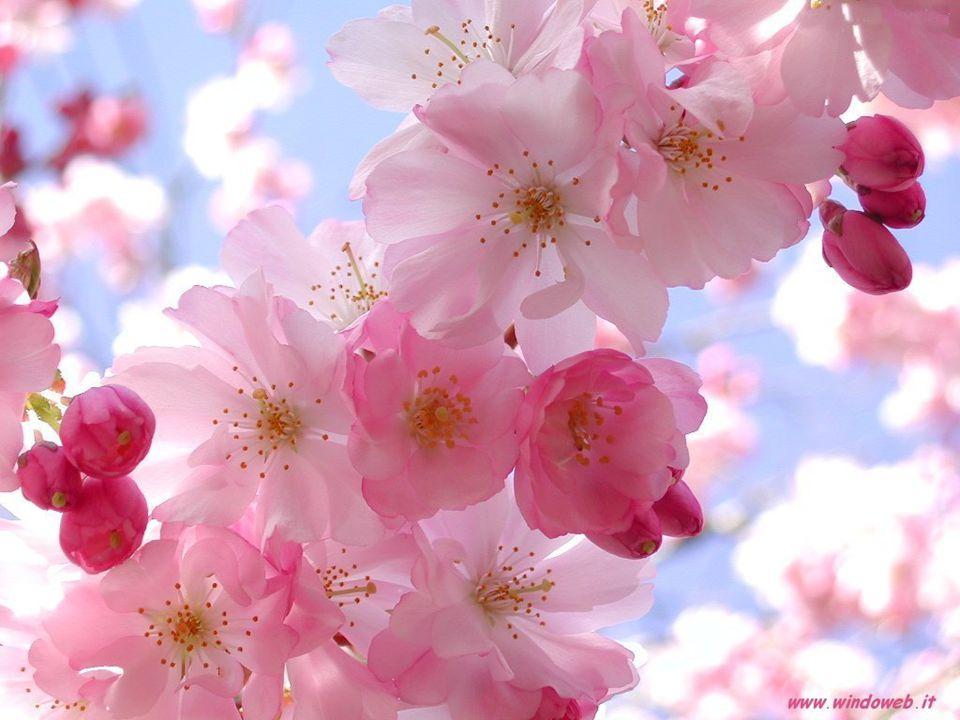 In un certo senso sarebbe bello andare in letargo durante la brutta stagione e risvegliarsi a primavera!
