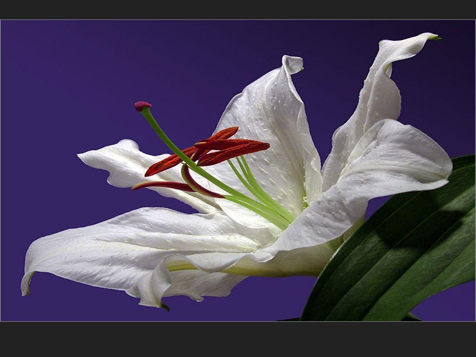 Che gioia risvegliarsi in primavera, guarda quante belle cose accadono …