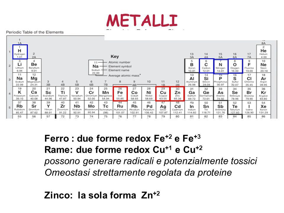 METALLI Ferro : due forme redox Fe +2 e Fe +3 Rame: due forme redox Cu +1 e Cu +2 possono generare radicali e potenzialmente tossici Omeostasi strettamente regolata da proteine Zinco: la sola forma Zn +2