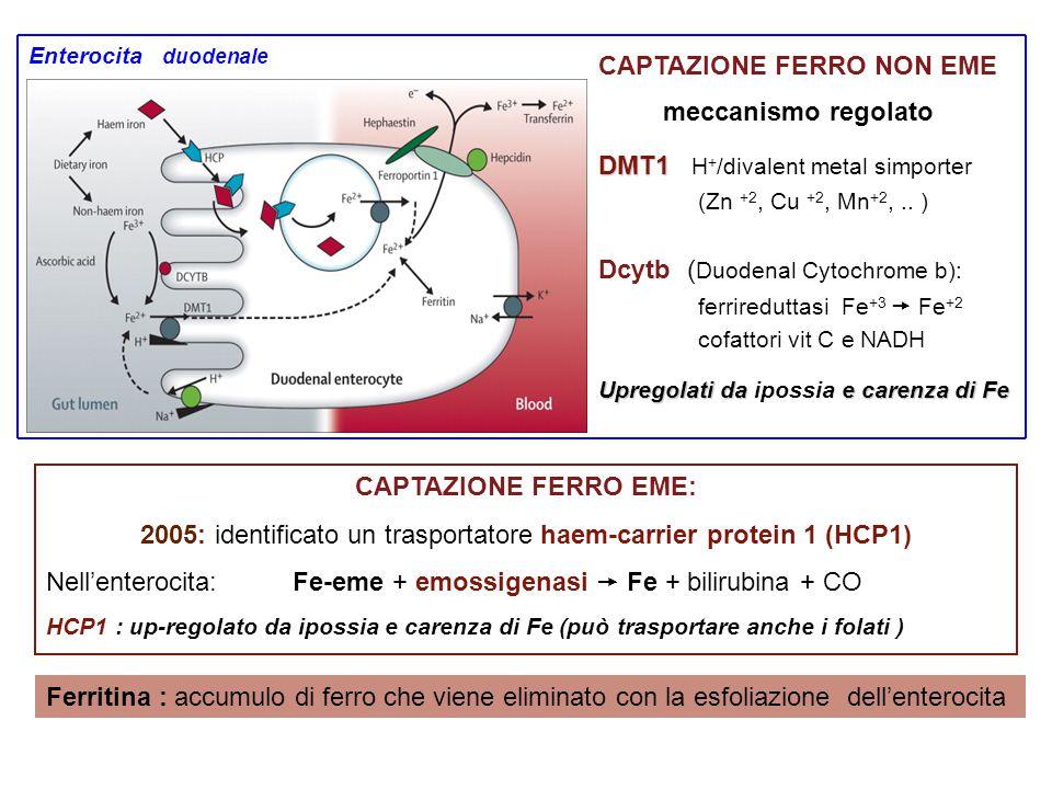 CAPTAZIONE FERRO EME: 2005: identificato un trasportatore haem-carrier protein 1 (HCP1) Nell'enterocita: Fe-eme + emossigenasi  Fe + bilirubina + CO HCP1 : up-regolato da ipossia e carenza di Fe (può trasportare anche i folati ) Ferritina : accumulo di ferro che viene eliminato con la esfoliazione dell'enterocita DMT1 DMT1 H + /divalent metal simporter (Zn +2, Cu +2, Mn +2,..
