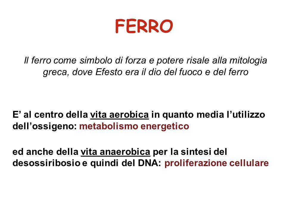 CONTROLLO DEL METABOLISMO A LIVELLO CELLULARE a livello della trascrizione Ipossia  trascrizione di Tfr e Tfr-R per aumentata eritropoiesi a livello della traduzione ferritina (H e L) Tf-R  aminolevulinato sintetasi DMT-1 ferroportina