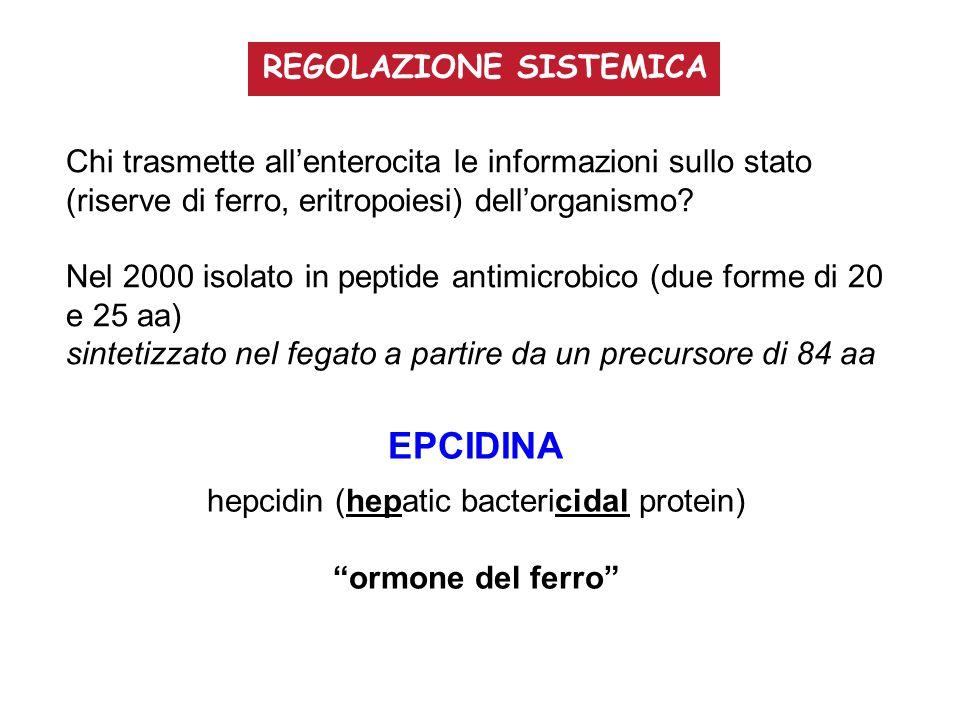 Chi trasmette all'enterocita le informazioni sullo stato (riserve di ferro, eritropoiesi) dell'organismo? Nel 2000 isolato in peptide antimicrobico (d