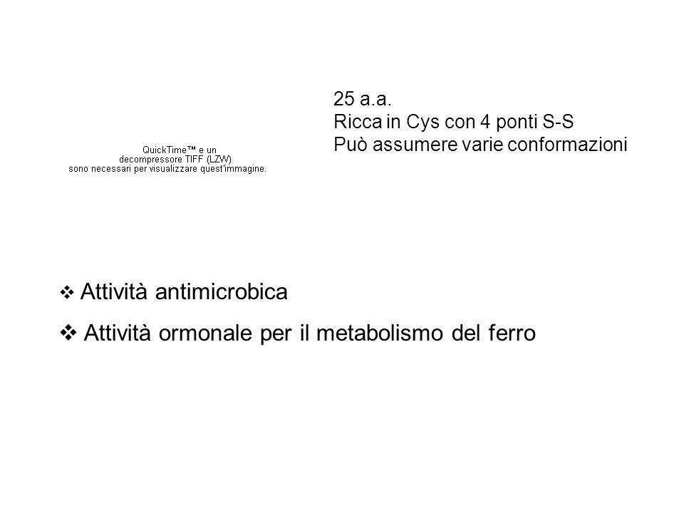  Attività antimicrobica  Attività ormonale per il metabolismo del ferro 25 a.a. Ricca in Cys con 4 ponti S-S Può assumere varie conformazioni