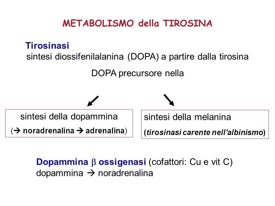 METABOLISMO della TIROSINA Tirosinasi sintesi diossifenilalanina (DOPA) a partire dalla tirosina DOPA precursore nella Dopammina  ossigenasi (cofattori: Cu e vit C) dopammina  noradrenalina sintesi della melanina (tirosinasi carente nell albinismo) sintesi della dopammina (  noradrenalina  adrenalina)