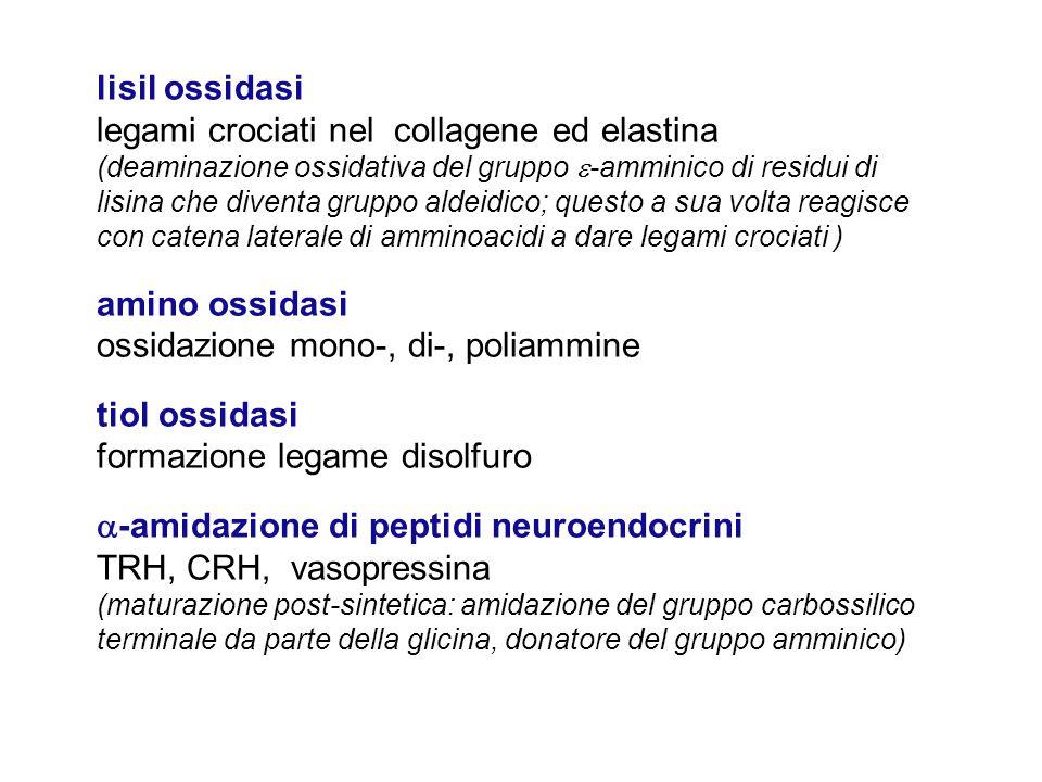 lisil ossidasi legami crociati nel collagene ed elastina (deaminazione ossidativa del gruppo  -amminico di residui di lisina che diventa gruppo aldei