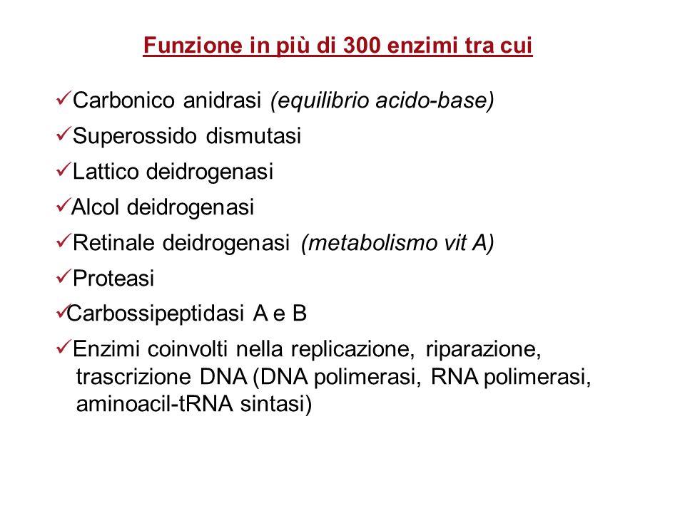 Funzione in più di 300 enzimi tra cui Carbonico anidrasi (equilibrio acido-base) Superossido dismutasi Lattico deidrogenasi Alcol deidrogenasi Retinale deidrogenasi (metabolismo vit A) Proteasi Carbossipeptidasi A e B Enzimi coinvolti nella replicazione, riparazione, trascrizione DNA (DNA polimerasi, RNA polimerasi, aminoacil-tRNA sintasi)