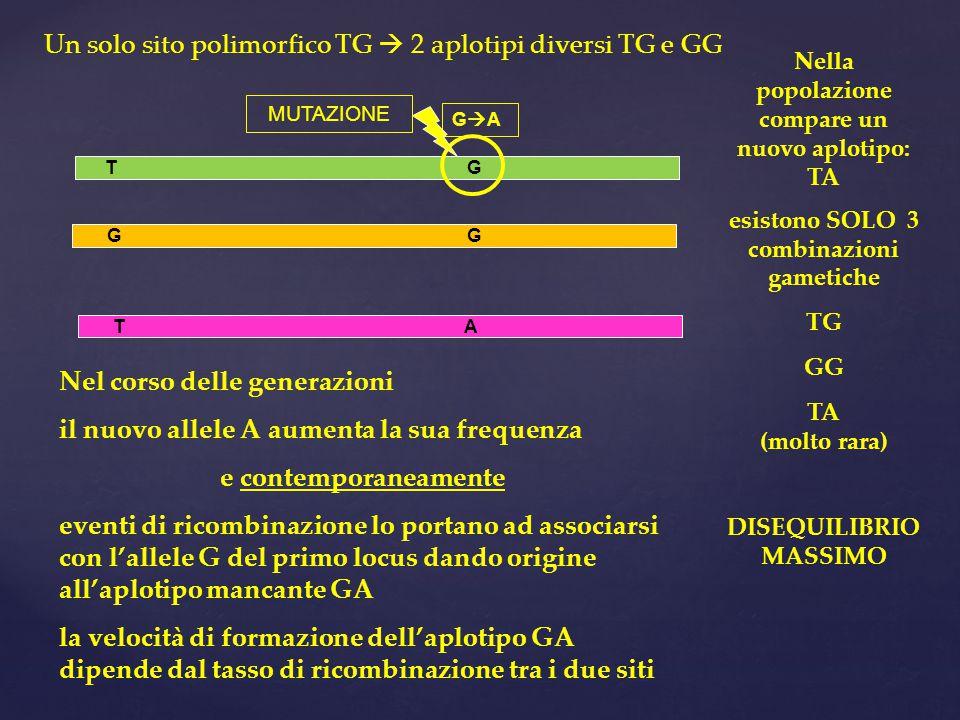 G G T G Nella popolazione compare un nuovo aplotipo: TA esistono SOLO 3 combinazioni gametiche TG GG TA (molto rara) DISEQUILIBRIO MASSIMO Nel corso delle generazioni il nuovo allele A aumenta la sua frequenza e contemporaneamente eventi di ricombinazione lo portano ad associarsi con l'allele G del primo locus dando origine all'aplotipo mancante GA la velocità di formazione dell'aplotipo GA dipende dal tasso di ricombinazione tra i due siti GAGA T A Un solo sito polimorfico TG  2 aplotipi diversi TG e GG MUTAZIONE