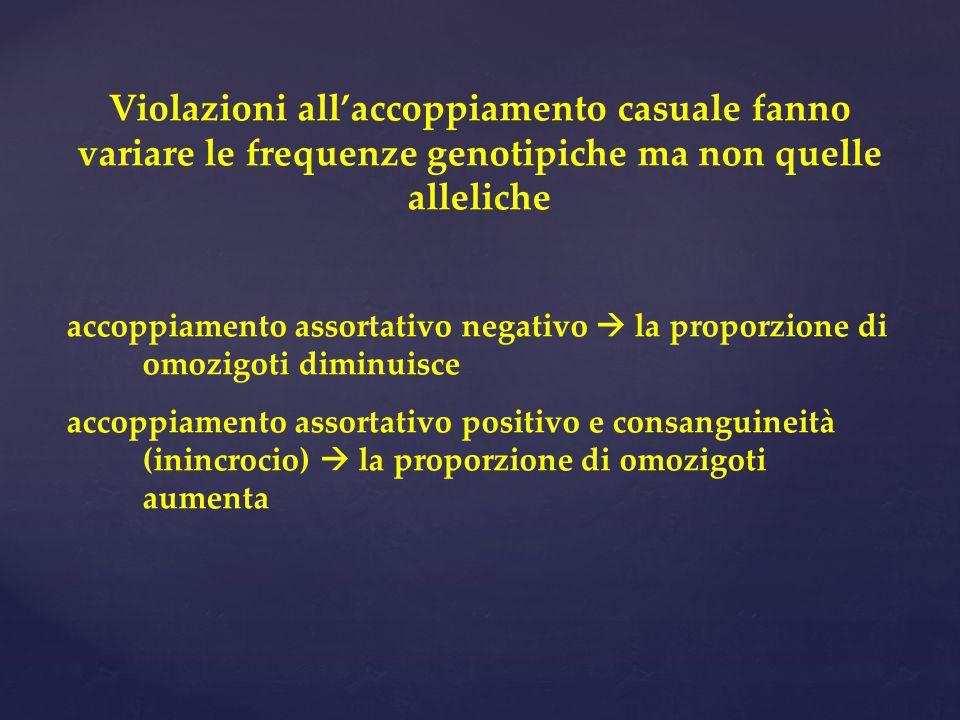 Violazioni all'accoppiamento casuale fanno variare le frequenze genotipiche ma non quelle alleliche accoppiamento assortativo negativo  la proporzione di omozigoti diminuisce accoppiamento assortativo positivo e consanguineità (inincrocio)  la proporzione di omozigoti aumenta