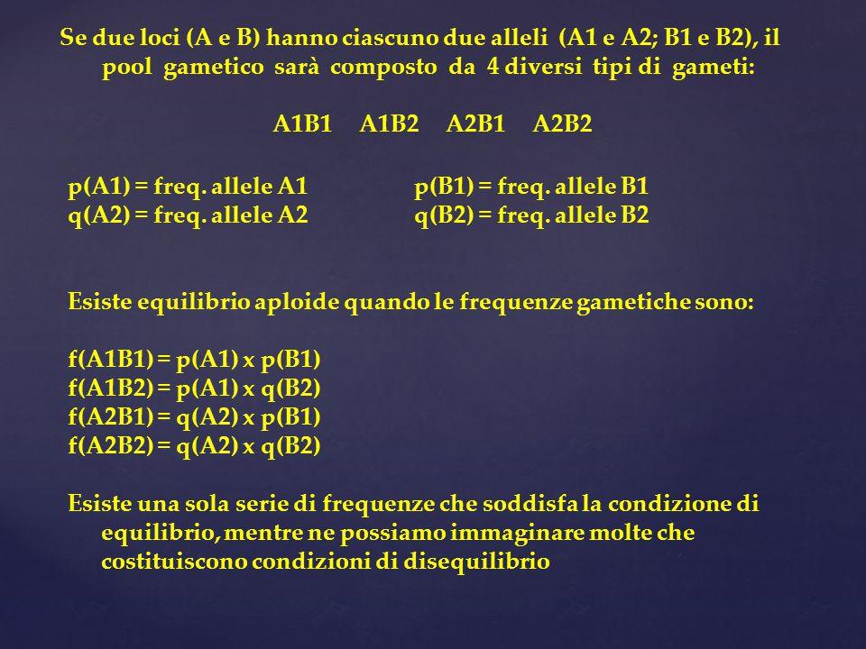 p(A1) = freq. allele A1p(B1) = freq. allele B1 q(A2) = freq. allele A2q(B2) = freq. allele B2 Esiste equilibrio aploide quando le frequenze gametiche