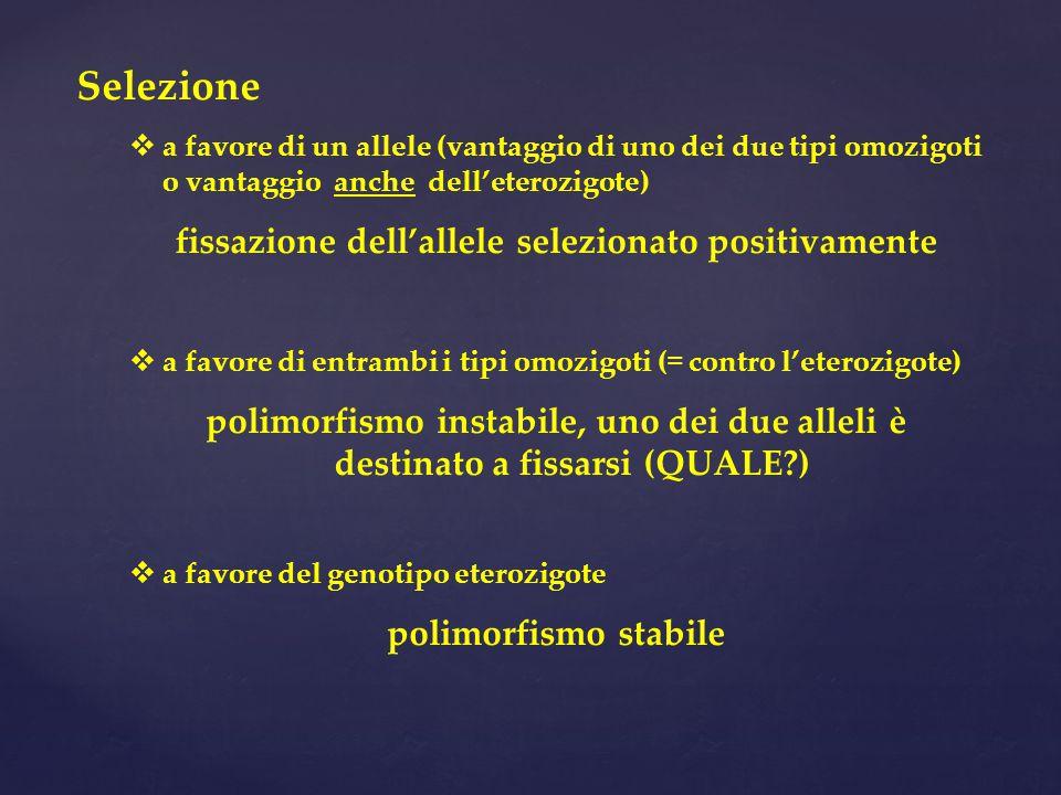 Selezione  a favore di un allele (vantaggio di uno dei due tipi omozigoti o vantaggio anche dell'eterozigote) fissazione dell'allele selezionato positivamente  a favore di entrambi i tipi omozigoti (= contro l'eterozigote) polimorfismo instabile, uno dei due alleli è destinato a fissarsi (QUALE?)  a favore del genotipo eterozigote polimorfismo stabile