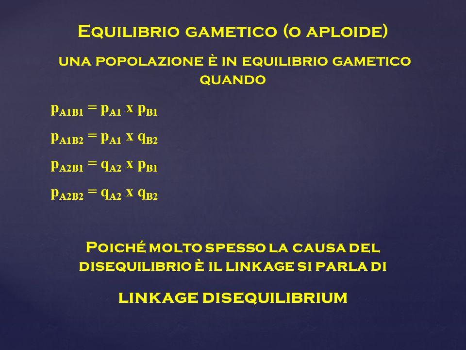 Equilibrio gametico (o aploide) una popolazione è in equilibrio gametico quando p A1B1 = p A1 x p B1 p A1B2 = p A1 x q B2 p A2B1 = q A2 x p B1 p A2B2 = q A2 x q B2 Poiché molto spesso la causa del disequilibrio è il linkage si parla di linkage disequilibrium