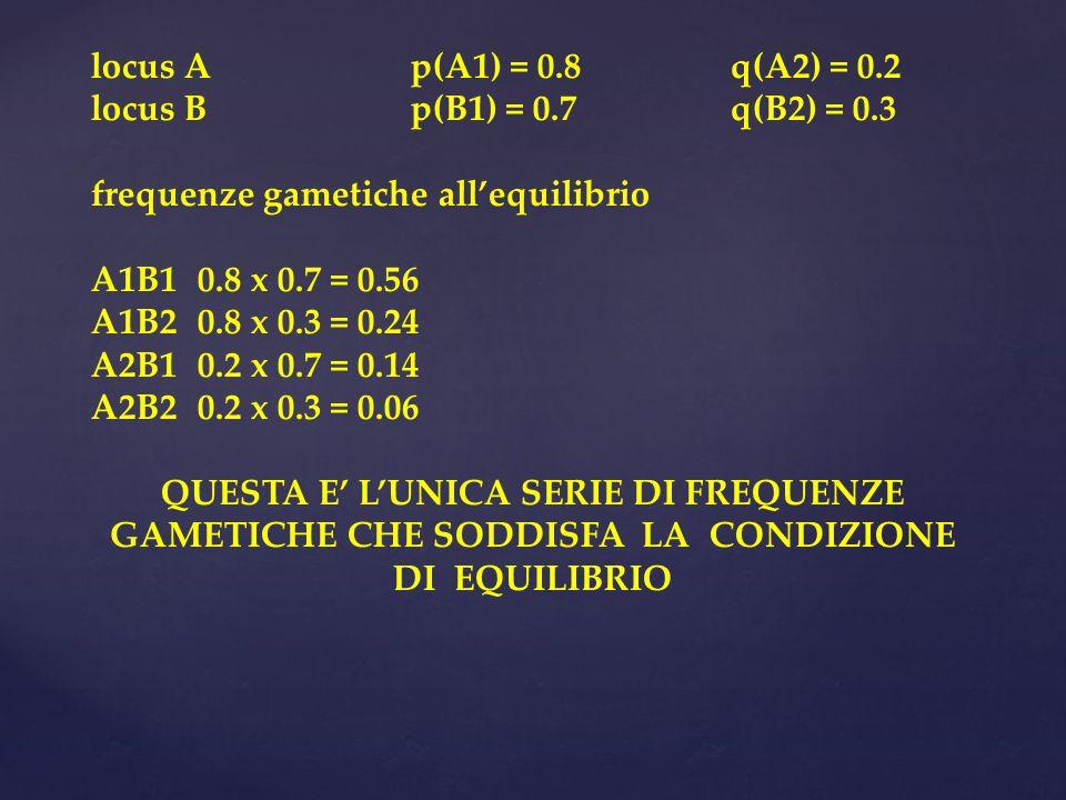 locus Ap(A1) = 0.8q(A2) = 0.2 locus Bp(B1) = 0.7q(B2) = 0.3 frequenze gametiche all'equilibrio A1B10.8 x 0.7 = 0.56 A1B2 0.8 x 0.3 = 0.24 A2B1 0.2 x 0.7 = 0.14 A2B20.2 x 0.3 = 0.06 QUESTA E' L'UNICA SERIE DI FREQUENZE GAMETICHE CHE SODDISFA LA CONDIZIONE DI EQUILIBRIO
