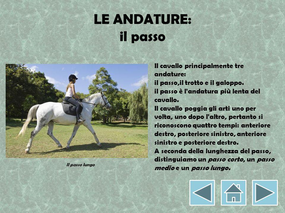LE ANDATURE: il passo Il cavallo principalmente tre andature: il passo,il trotto e il galoppo. il passo è l'andatura più lenta del cavallo. Il cavallo