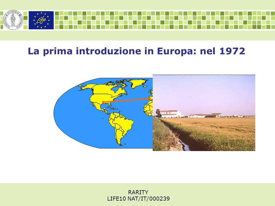 La prima introduzione in Europa: nel 1972 RARITY LIFE10 NAT/IT/000239