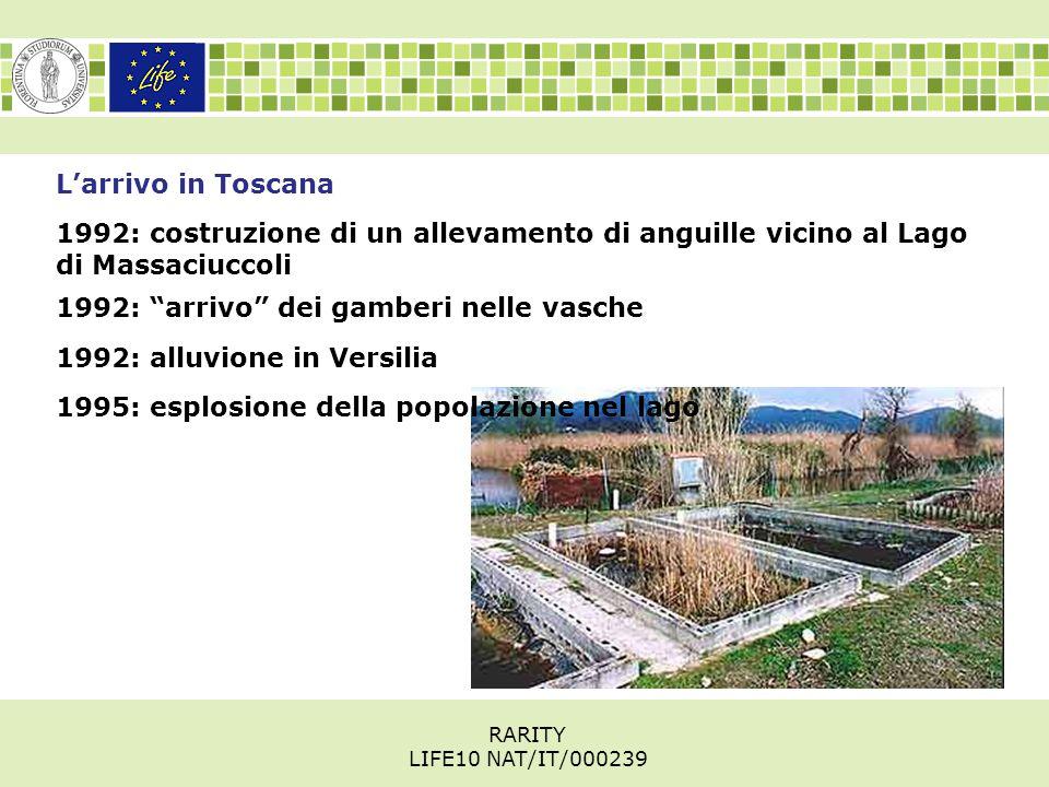 L'arrivo in Toscana 1992: costruzione di un allevamento di anguille vicino al Lago di Massaciuccoli 1995: esplosione della popolazione nel lago 1992: arrivo dei gamberi nelle vasche 1992: alluvione in Versilia RARITY LIFE10 NAT/IT/000239