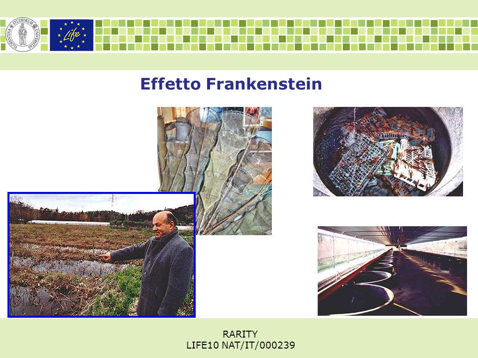 Effetto Frankenstein RARITY LIFE10 NAT/IT/000239