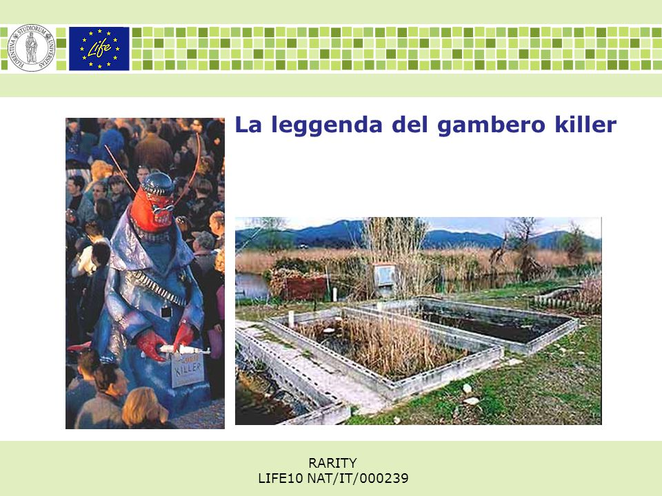 La leggenda del gambero killer RARITY LIFE10 NAT/IT/000239