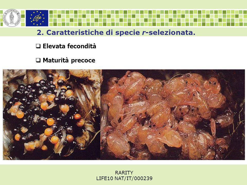 2. Caratteristiche di specie r-selezionata.