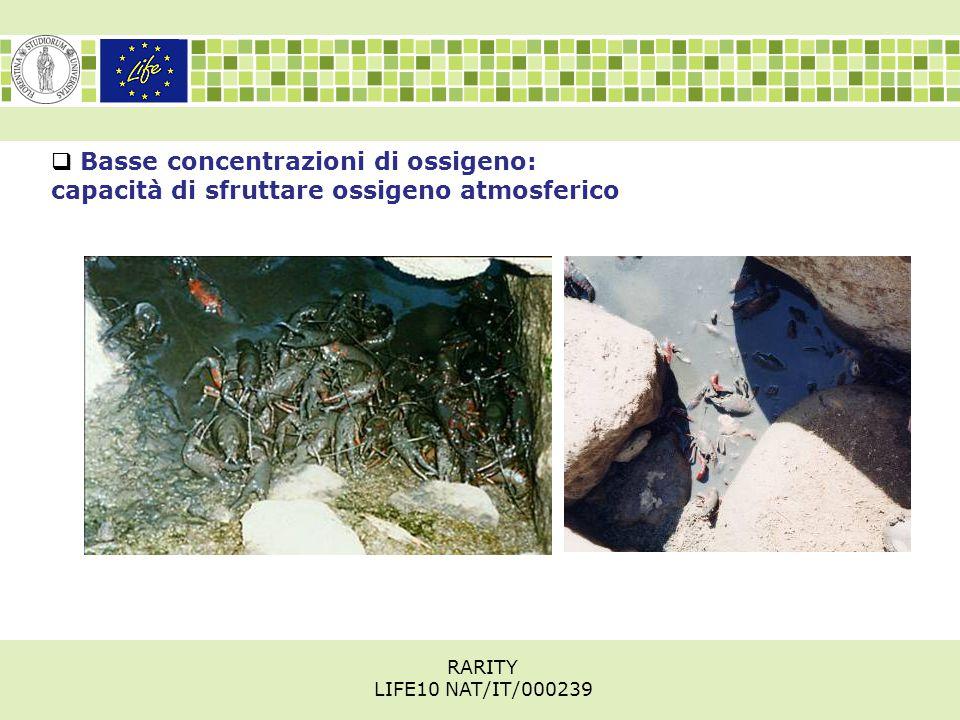  Basse concentrazioni di ossigeno: capacità di sfruttare ossigeno atmosferico RARITY LIFE10 NAT/IT/000239