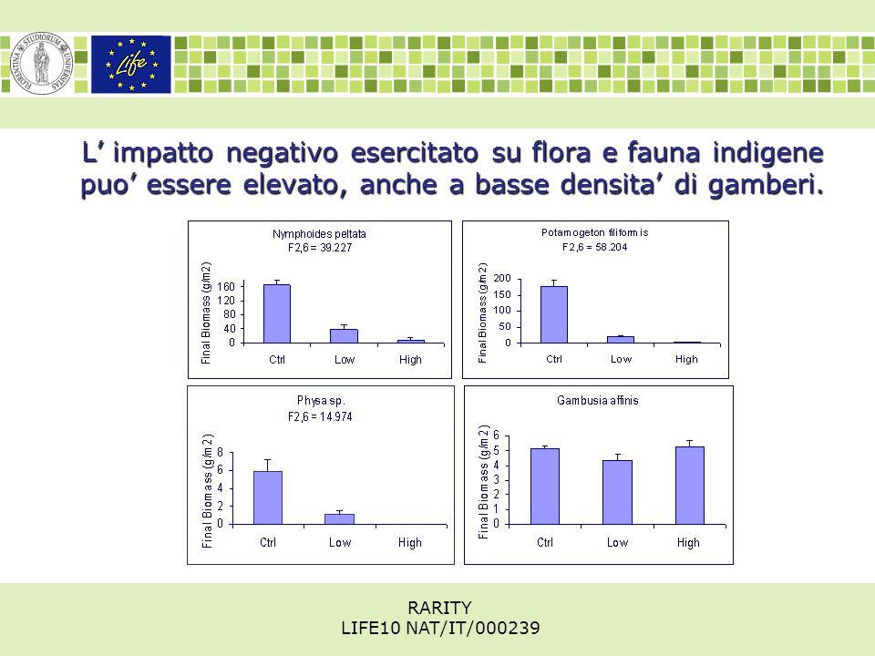 L' impatto negativo esercitato su flora e fauna indigene puo' essere elevato, anche a basse densita' di gamberi.