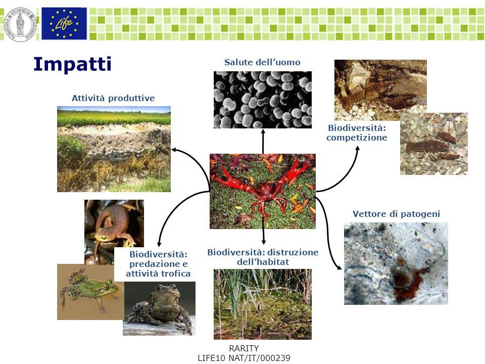 Impatti Biodiversità: competizione Biodiversità: distruzione dell'habitat Salute dell'uomo Attività produttive Biodiversità: predazione e attività trofica Vettore di patogeni RARITY LIFE10 NAT/IT/000239