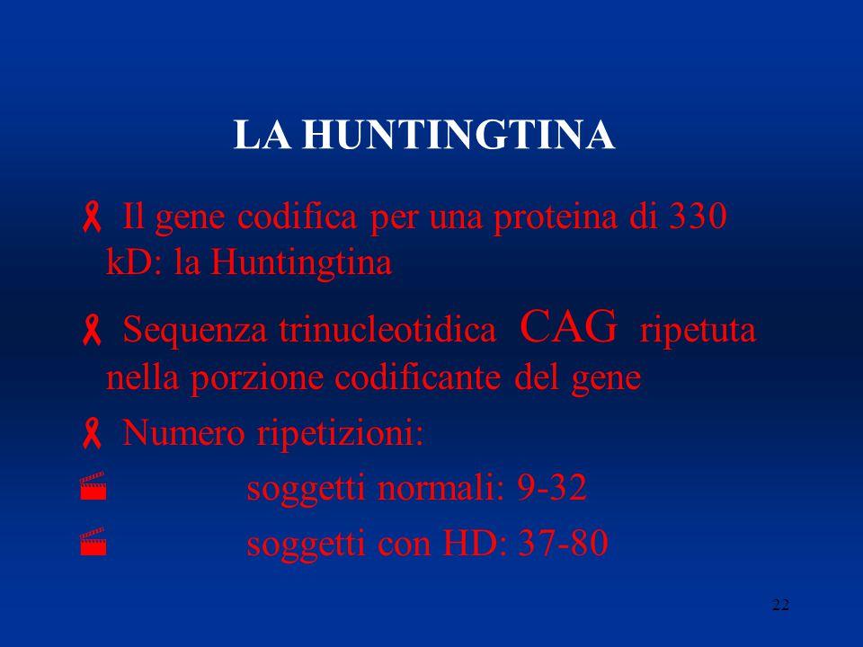22 LA HUNTINGTINA  Il gene codifica per una proteina di 330 kD: la Huntingtina  Sequenza trinucleotidica CAG ripetuta nella porzione codificante del gene  Numero ripetizioni:  soggetti normali: 9-32  soggetti con HD: 37-80