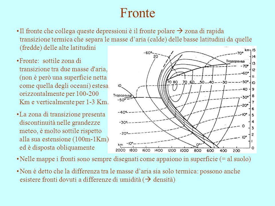 Fronte Il fronte che collega queste depressioni è il fronte polare  zona di rapida transizione termica che separa le masse d'aria (calde) delle basse