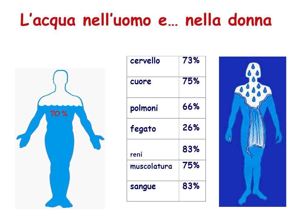cervello73% cuore75% polmoni 66% fegato 26% reni 83% muscolatura 75% sangue83% L'acqua nell'uomo e… nella donna