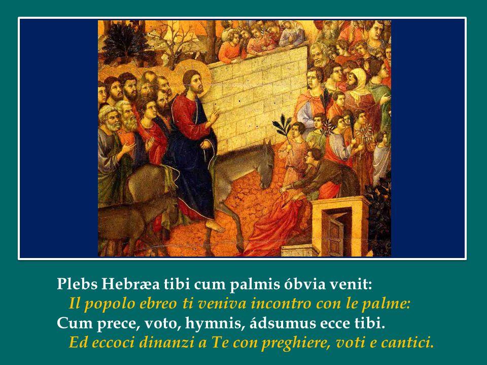 Plebs Hebræa tibi cum palmis óbvia venit: Il popolo ebreo ti veniva incontro con le palme: Cum prece, voto, hymnis, ádsumus ecce tibi.