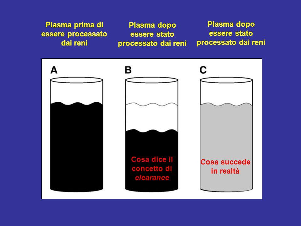 Plasma prima di essere processato dai reni Plasma dopo essere stato processato dai reni Cosa dice il concetto di clearance Cosa succede in realtà