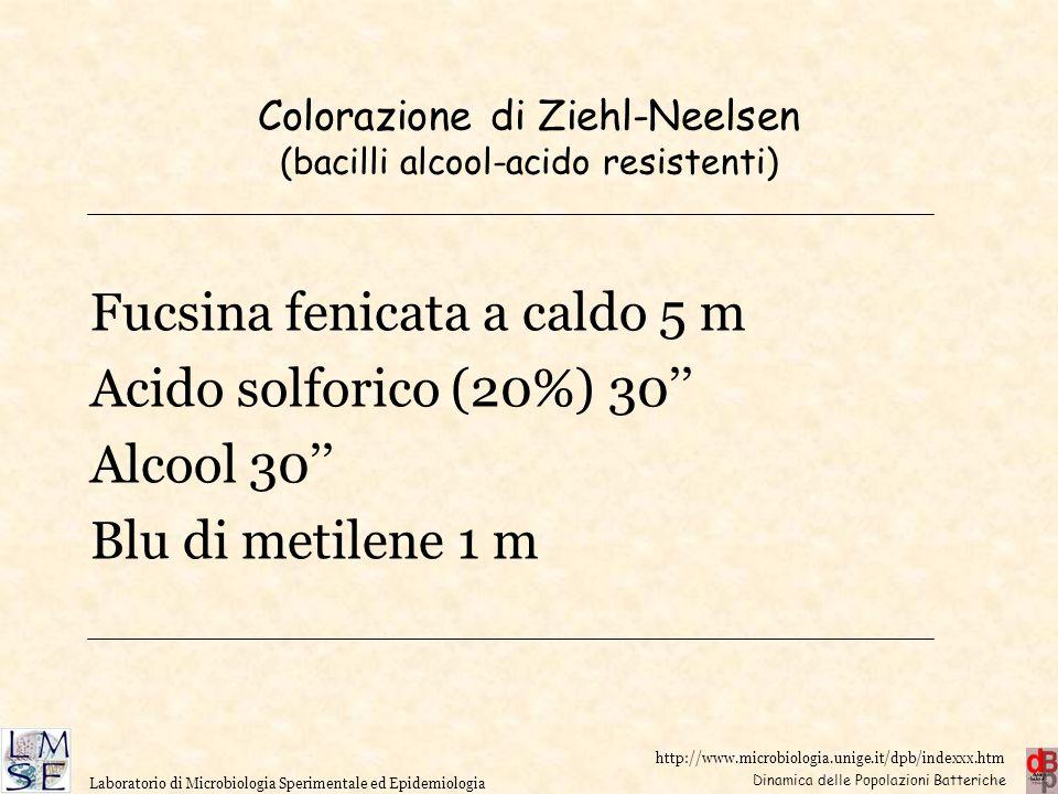 Dinamica delle Popolazioni Batteriche Laboratorio di Microbiologia Sperimentale ed Epidemiologia Colorazione di Ziehl-Neelsen (bacilli alcool-acido re
